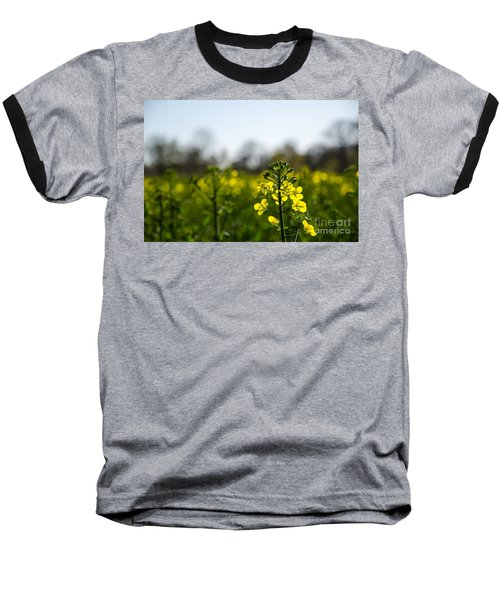 Backlit Canola Flower Baseball T-Shirt