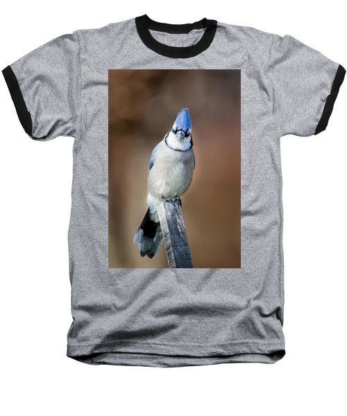 Backyard Birds Blue Jay Baseball T-Shirt by Bill Wakeley