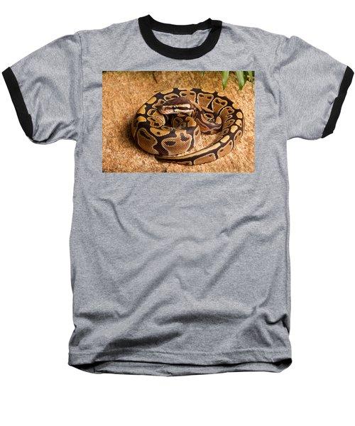 Ball Python Python Regius Coiled On Rock Baseball T-Shirt by David Kenny