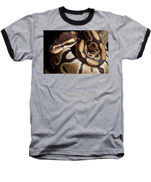 Ball Python Python Regius Baseball T-Shirt by David Kenny