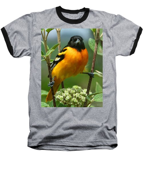 Baltimore Oriole Baseball T-Shirt