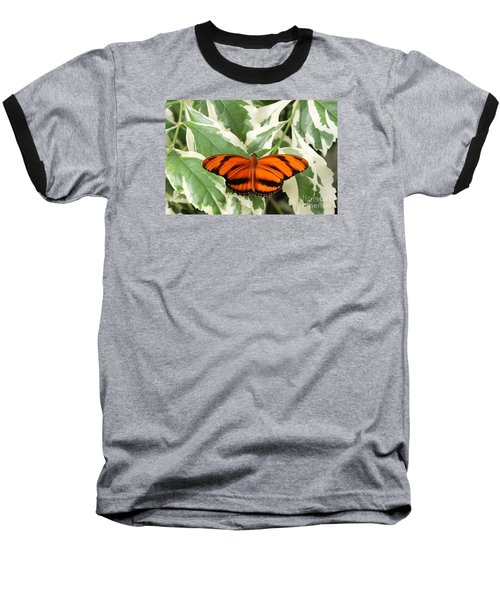Banded Orange Longwing Butterfly Baseball T-Shirt by Judy Whitton
