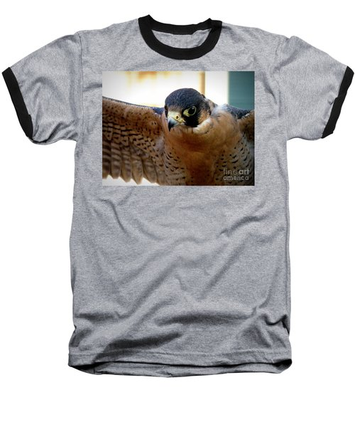 Barbary Falcon Wings Stretched Baseball T-Shirt by Lainie Wrightson