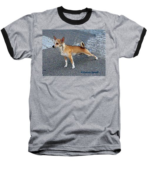 Basenji 2 Baseball T-Shirt