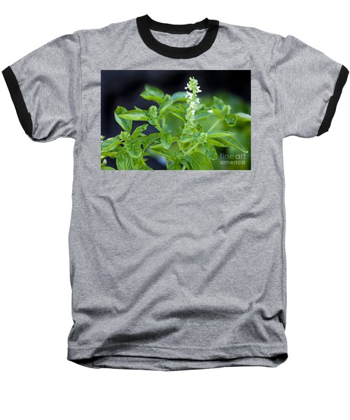 Basil With White Flowers Ready For Culinary Use Baseball T-Shirt by David Millenheft