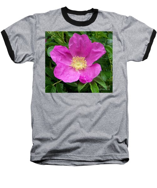 Pink Beach Rose Fully In Bloom Baseball T-Shirt by Eunice Miller