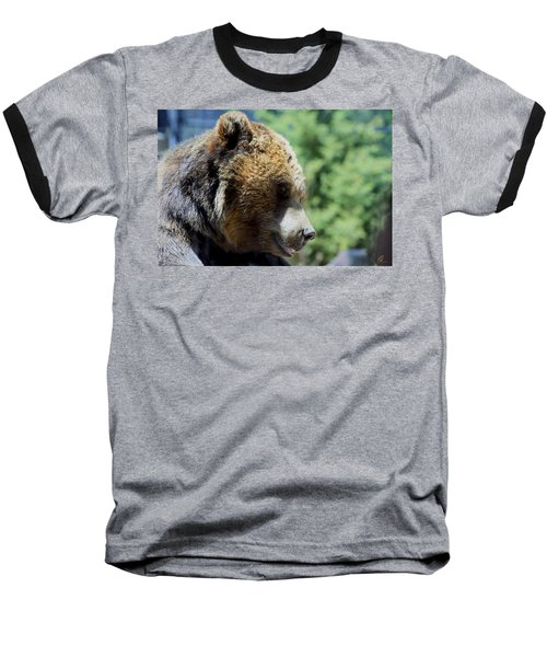 Bear Baseball T-Shirt