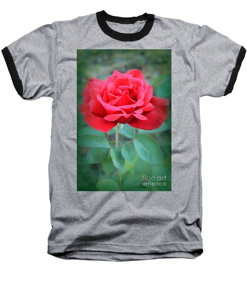 Beautiful Morning Rose  Baseball T-Shirt