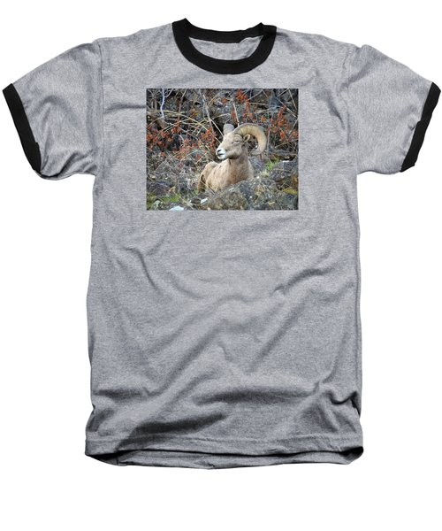 Baseball T-Shirt featuring the photograph Bedded Bighorn by Steve McKinzie
