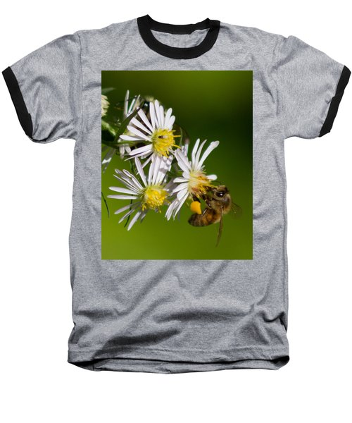 Bee Harvest Baseball T-Shirt