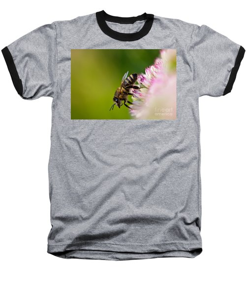Bee Sitting On A Flower Baseball T-Shirt