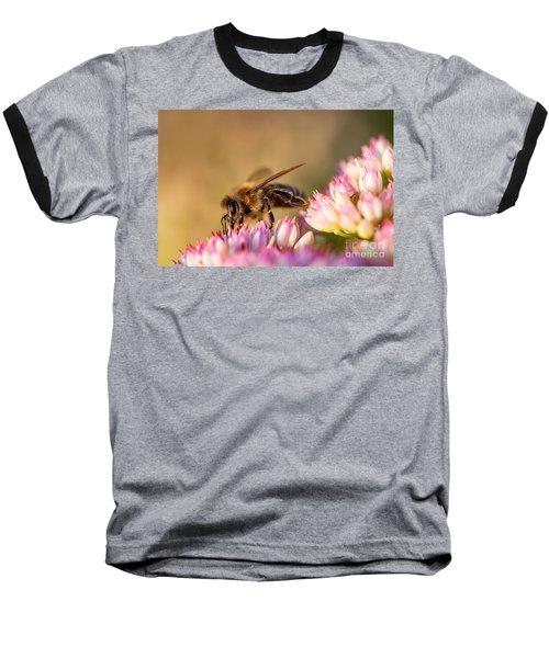 Bee Sitting On Flower Baseball T-Shirt