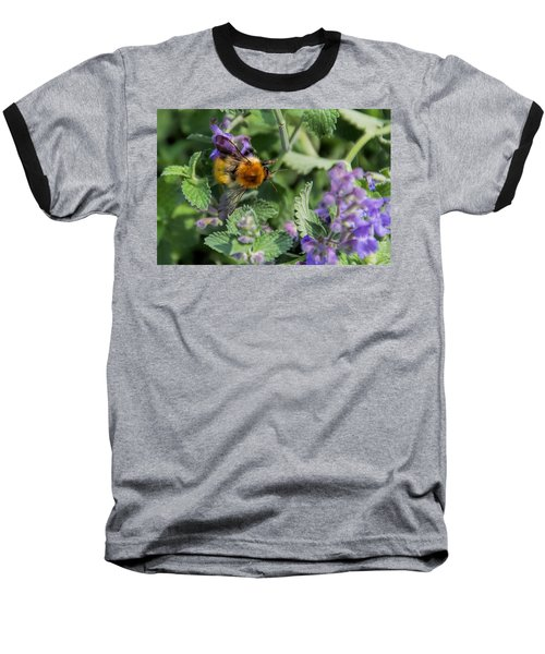 Baseball T-Shirt featuring the photograph Bee Too by David Gleeson