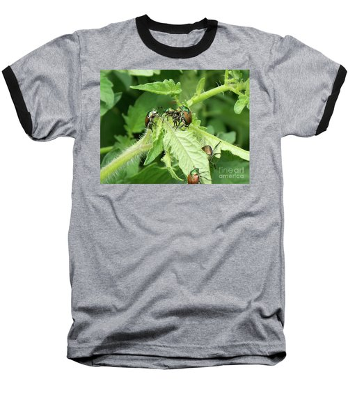 Baseball T-Shirt featuring the photograph Beetle Posse by Thomas Woolworth