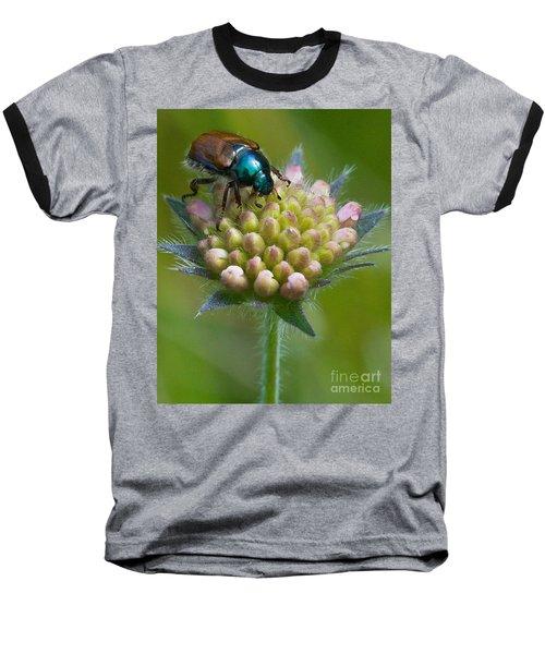 Beetle Sitting On Flower Baseball T-Shirt