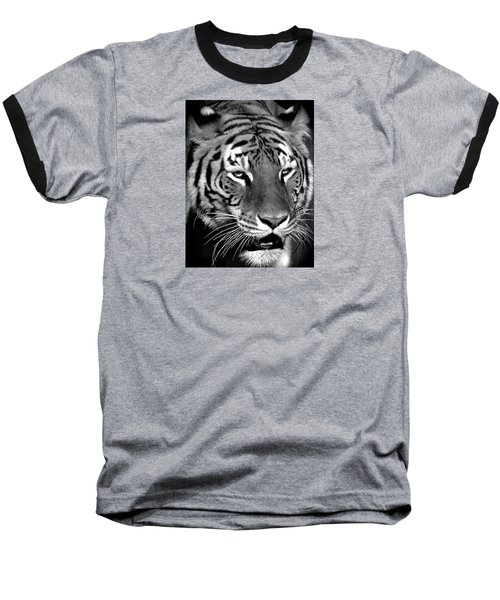 Bengal Tiger In Black And White Baseball T-Shirt by Venetia Featherstone-Witty