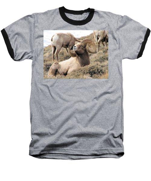 Big Bighorn Ram Baseball T-Shirt