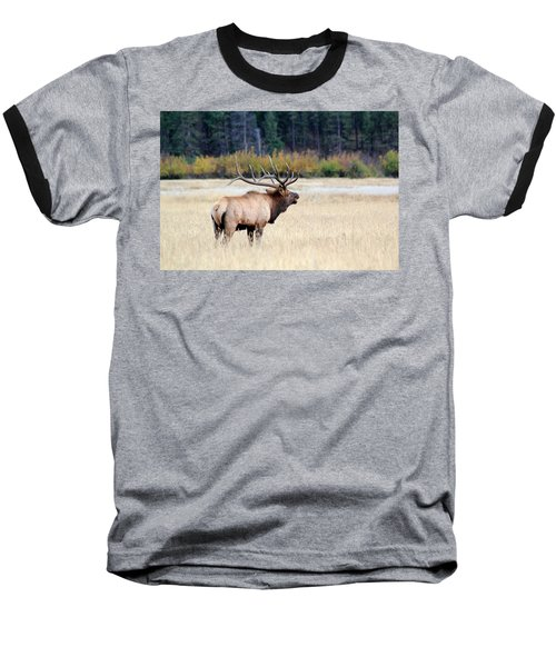 Big Colorado Bull Baseball T-Shirt