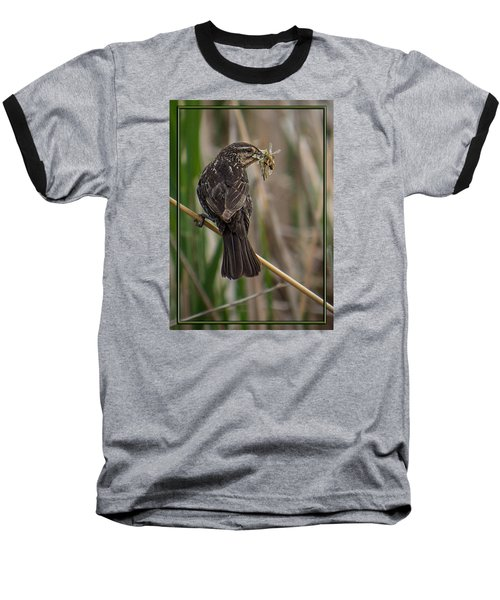 Baseball T-Shirt featuring the photograph Big Dinner For Female Red Winged Blackbird II by Patti Deters