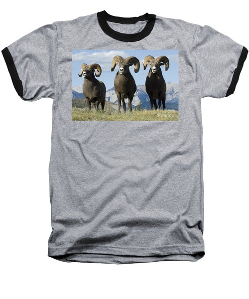 Big Horn Sheep Baseball T-Shirt by Bob Christopher