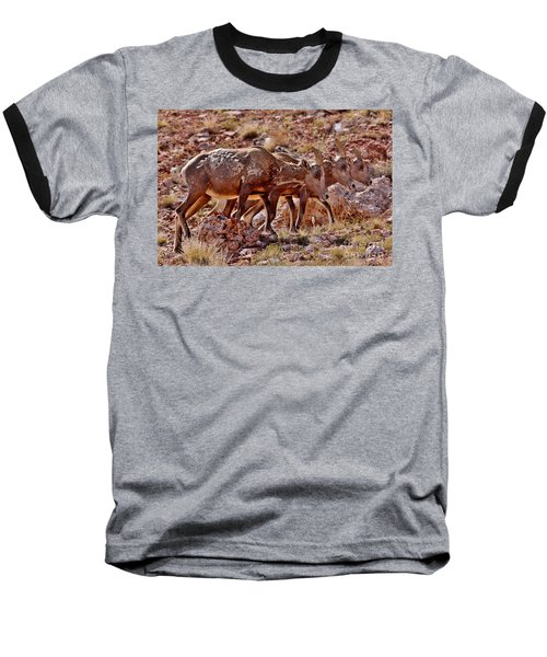 Baseball T-Shirt featuring the photograph Bighorn Canyon Sheep Trio by Janice Rae Pariza