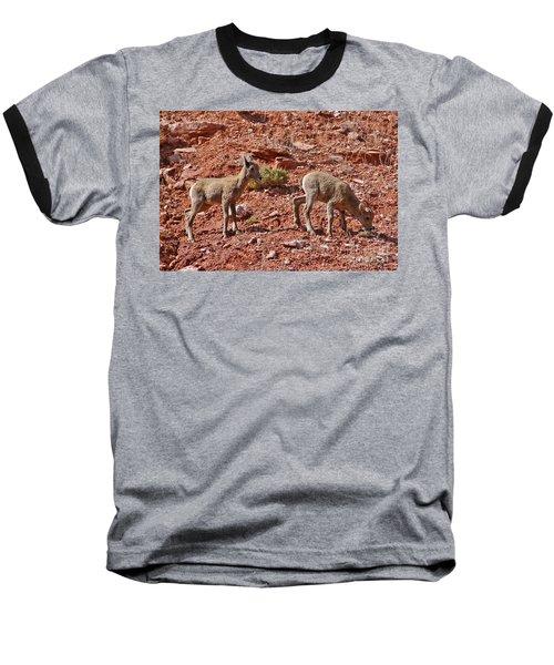 Baseball T-Shirt featuring the photograph Bighorn Canyon Sheep Wyoming by Janice Rae Pariza