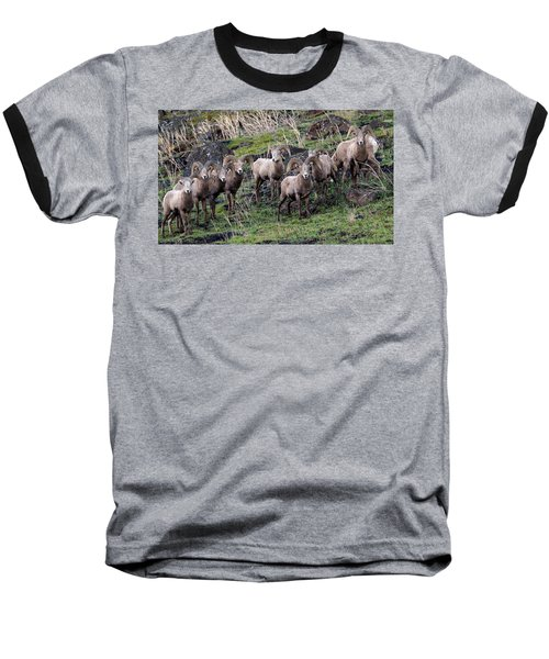 Baseball T-Shirt featuring the photograph Bighorn Reunion by Steve McKinzie