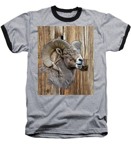 Bighorn Sheep Barnwood Baseball T-Shirt by Steve McKinzie