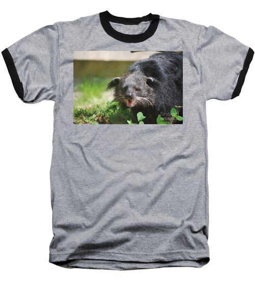 Binturong Baseball T-Shirt by DejaVu Designs