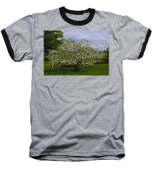 Birth Of Apples Baseball T-Shirt by John Haldane