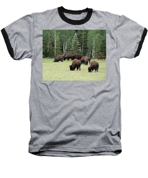 Bison At North Rim Baseball T-Shirt by Laurel Powell