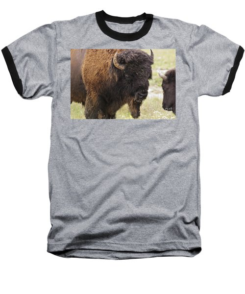 Baseball T-Shirt featuring the photograph Bison From Yellowstone by Belinda Greb