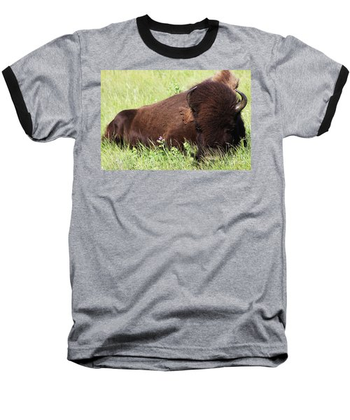 Bison Nap Baseball T-Shirt by Alyce Taylor