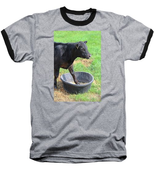 Black Angus Calf Baseball T-Shirt