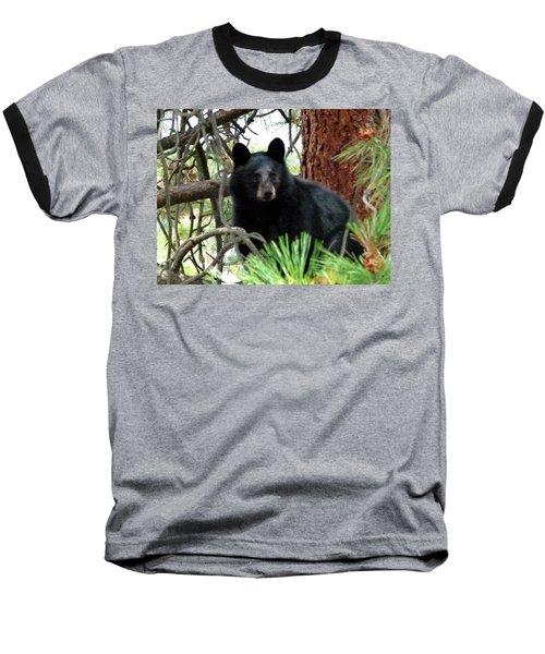 Black Bear 1 Baseball T-Shirt by Will Borden