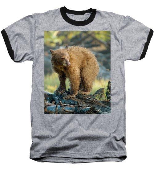 Baseball T-Shirt featuring the photograph Black Bear by Doug Herr