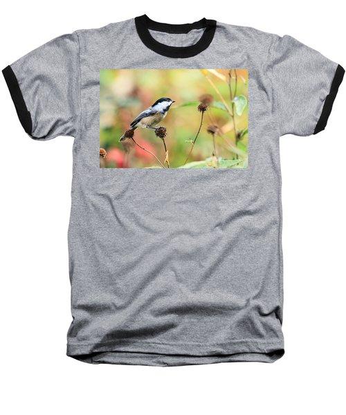 Black Capped Chickadee 1 Baseball T-Shirt