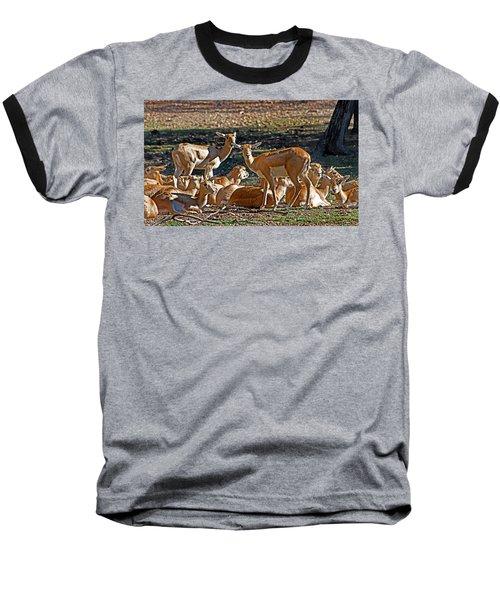Blackbuck Female And Fawns Baseball T-Shirt