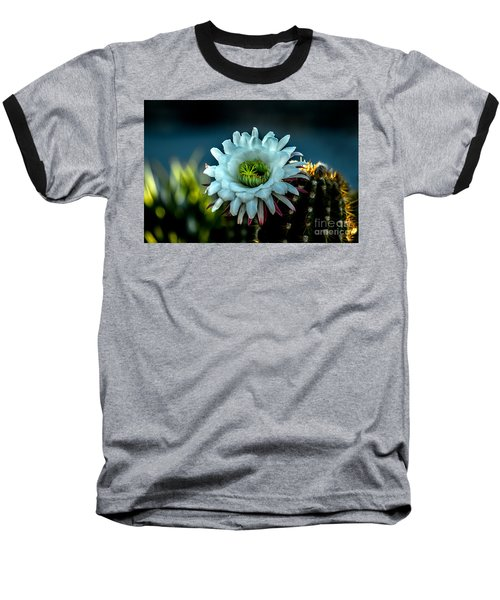 Blooming Argentine Giant Baseball T-Shirt by Robert Bales
