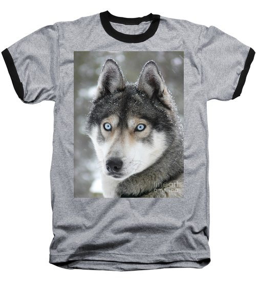 Blue Eyes Husky Dog Baseball T-Shirt by iPics Photography