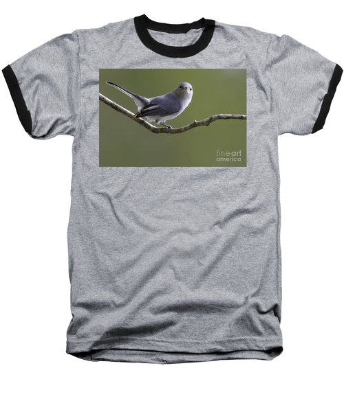 Blue-gray Gnatcatcher Baseball T-Shirt