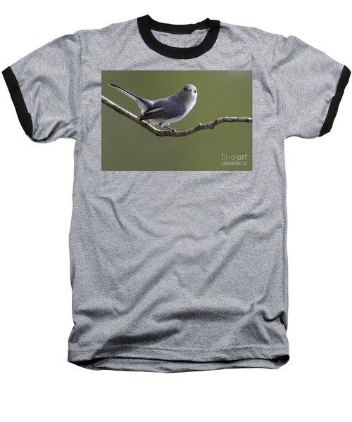 Blue-gray Gnatcatcher Baseball T-Shirt by Meg Rousher