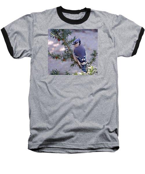 Blue Jay - Morning Visitor  Baseball T-Shirt