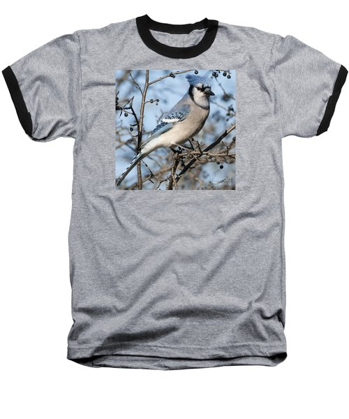 Blue Jay.. Baseball T-Shirt by Nina Stavlund