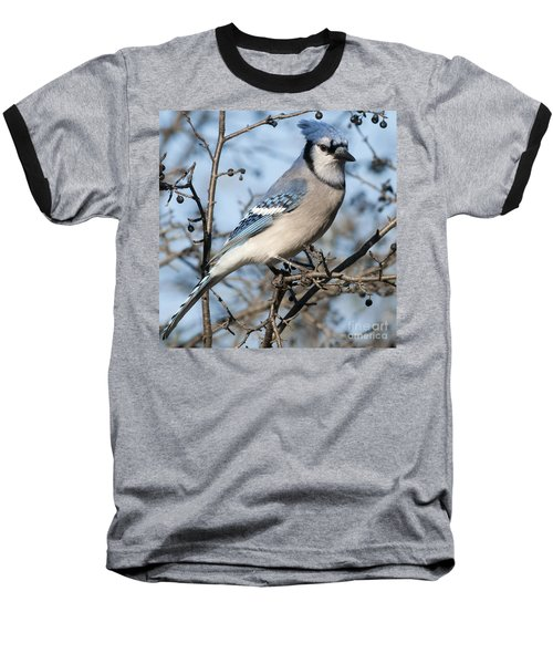 Blue Jay.. Baseball T-Shirt
