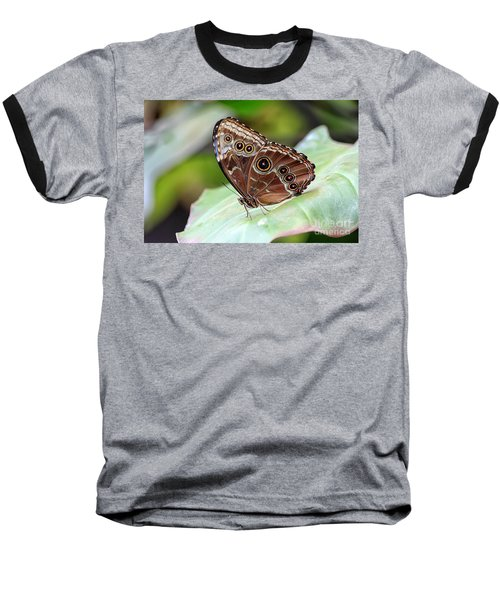 Baseball T-Shirt featuring the photograph Blue Morpho Butterfly by Teresa Zieba