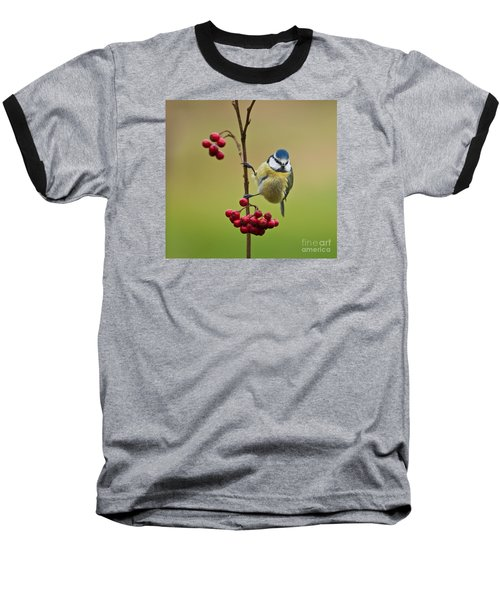 Baseball T-Shirt featuring the photograph Blue Tit With Hawthorn Berries by Liz Leyden