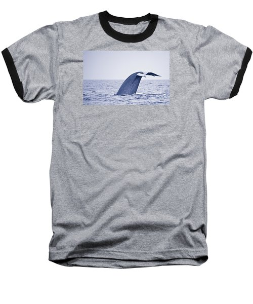 Baseball T-Shirt featuring the photograph Blue Whale Tail Fluke With Remoras by Liz Leyden