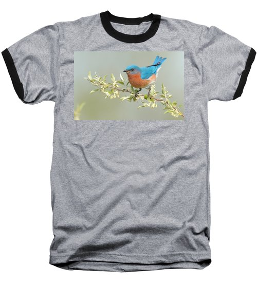 Bluebird Floral Baseball T-Shirt
