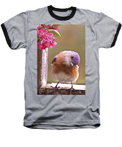 Bluebird Baseball T-Shirt by Jean Noren